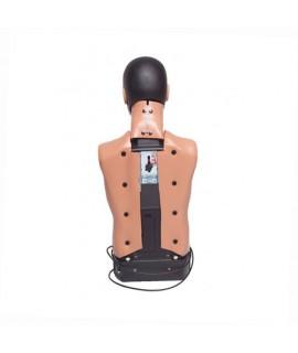 Pack mannequin Ambu Standard +